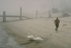 A man jogs past swans on a fog covered beach in New London, CT